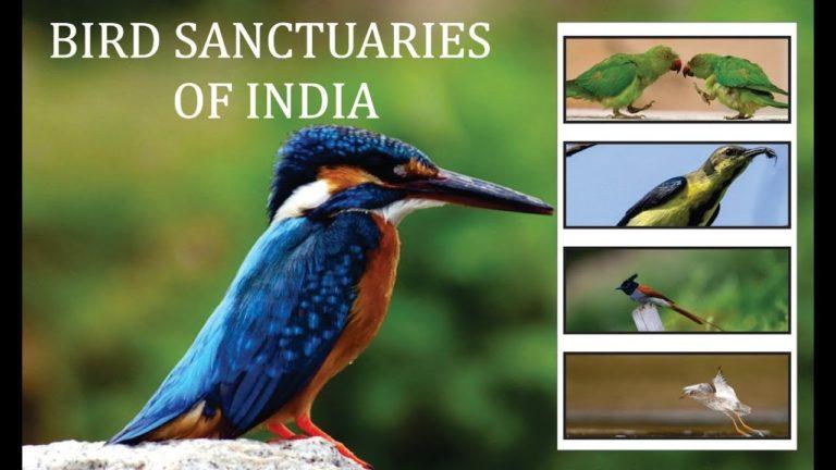 Bird Sanctuaries in India Notes 2021: Download Bird Sanctuaries in India Notes Study Materials